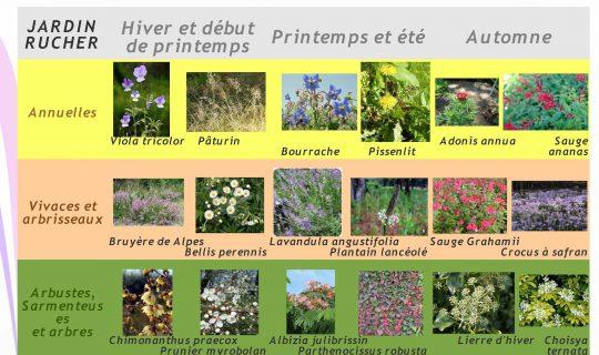 palette végétale Jardin collectif nourricier