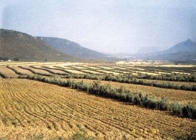 Agroforestry and sylvopastoralism