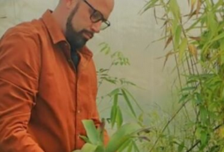 Plantes jardin sec aromatiques