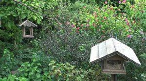 Accueil biodiversité jardin