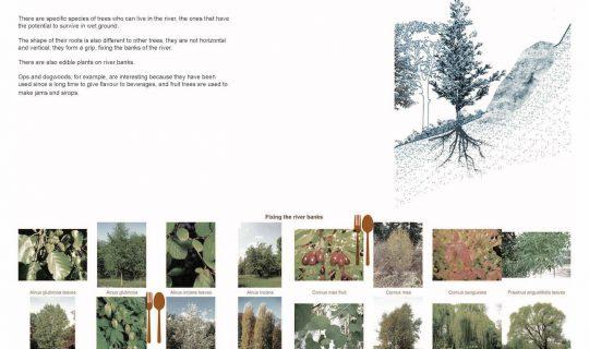 Palette végétale de fixation des berges